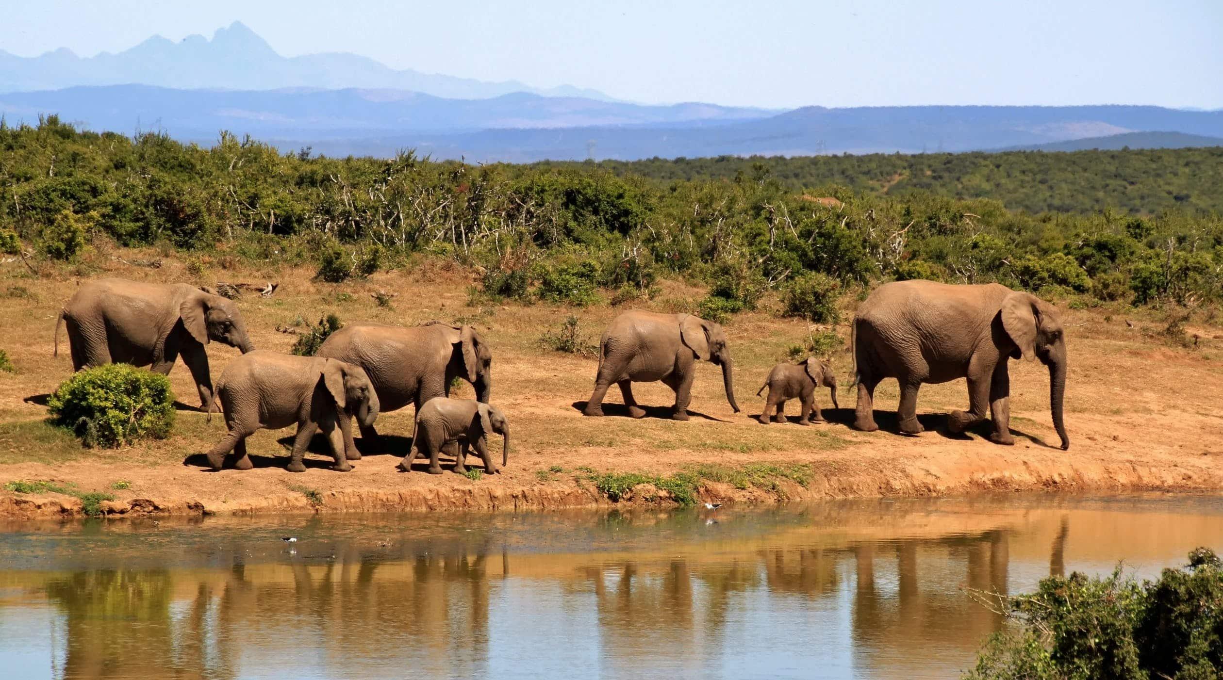 Huwelijksreis Safari in Zuid-Afrika